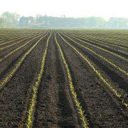 Početna cena od nula dinara za nekorišćeno poljoprivredno zemljište na javnom nadmetanju