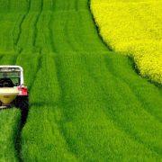 Pšenica je pojeftinila, soja i dalje na visokom cenovnom nivou