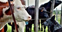 EK podržala inicijativu o zabrani kaveza za životinje na farmama