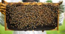 KONKURS ZA POMOĆ PČELARIMA Podsticaji od 800 dinara po košnici