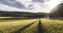 Cena soje raste kod nas i u svetu, pšenica će verovatno da poskupi