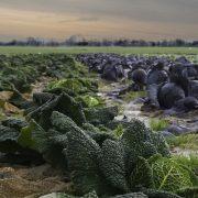 POVRTARSTVO ZA PREPOROD SELA SRBIJE  Povratnici da ulažu u proizvodnju povrća