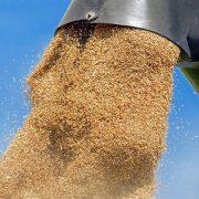 Nagli rast cena pšenice na robnim berzama CME i Euronext