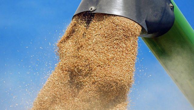 Srbija će imati više od dva miliona tona pšenice za izvoz