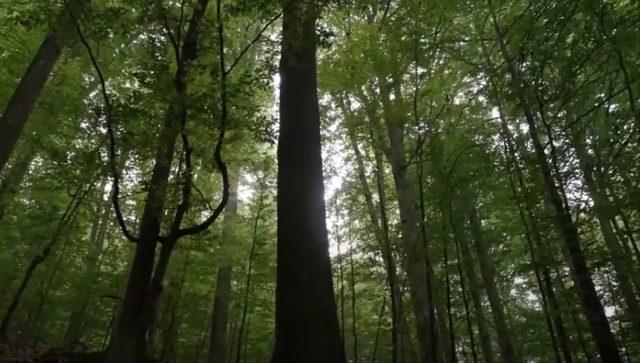 Crna Gora planira obnovu 20 hektara šuma