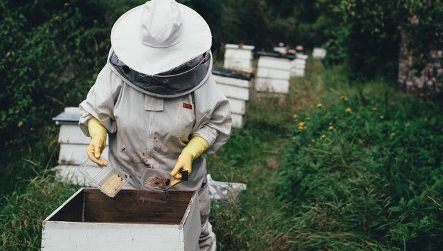 PČELARSTVO JE SIGURAN I ISPLATIV POSAO Relativno mala ulaganja, a dobra zarada