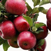 Proizvođači jabuka iz Srbije imaće veliku konkurenciju na inostranim tržištima