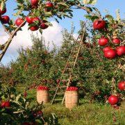"Praktična znanja i inovacije za uspešan ""Biznis u poljoprivredi"""