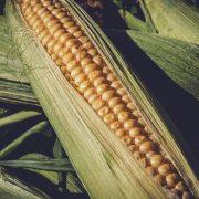Cena soje na istorijskom maksimumu na domaćoj berzi poljoprivrednih proizvoda