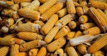 Poljoprivredni izvoz Srbije veći za 13,6 odsto u prvoj polovini godine