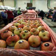 """Domaće jabuke u hladnjačama """"čekaju"""" rešenje države"""