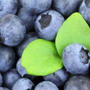 Tržište SAD velika šansa za proizvođače voća, izvoz iz Srbije oko 30 miliona dolara