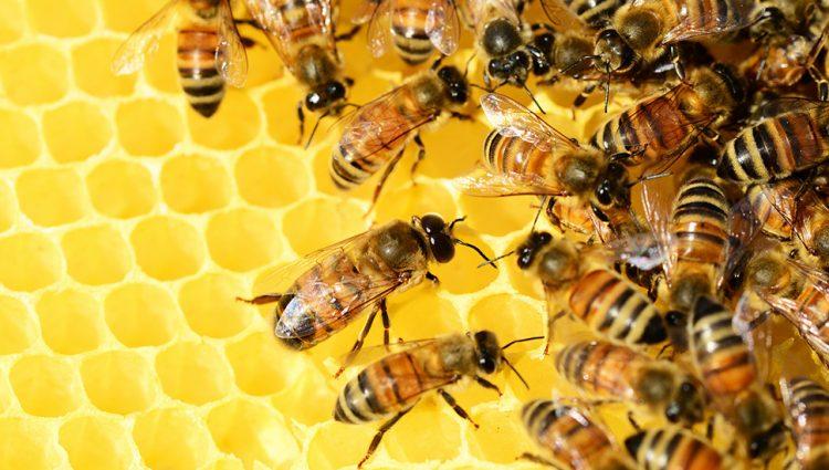 Inspektori kažnjavaju nesavesne trgovce medom