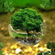 IFC se pridružio inicijativi kupovine zelenih obveznica