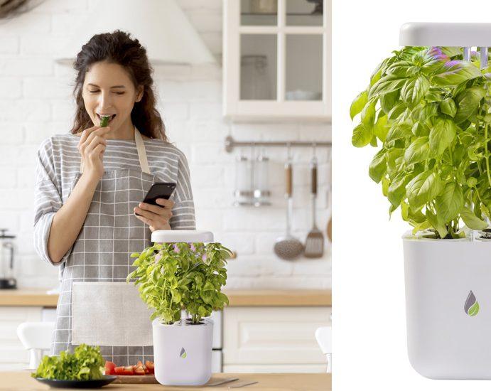 UPRAVLJAJTE SVOJOM BAŠTOM PUTEM WI-FI Tim srpskih stručnjaka osmislio pametan uređaj za gajenje biljaka i to putem mobilne aplikacije