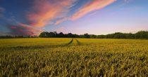 Pšenica najtraženija, soja potpuno pasivna