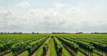 POLJOPRIVREDNICIMA 53 MILIJARDE DINARA SUBVENCIJA Veću podršku naredne godine dobiće vinogradari, najavljuje Nedimović