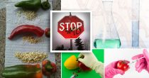 Ima li Srbija zaista nultu toleranciju prema GMO?