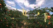 U nedostatku radne snage, dronovi beru voće