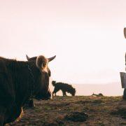 Bavljenje proizvodnjom mleka perspektivno i unosno zanimanje