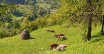 Uprkos poskupljenju namirnica na svetskoj berzi, manje firme u BiH uspevaju da posluju uspešno