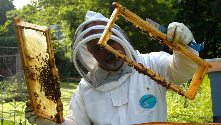 Kako pčelari mogu do boljeg prinosa i većih prihoda