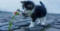 Top lista pet najštetnijih životinjskih vrsta