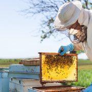 Dileri crnih pesticida uništavaju pčelare