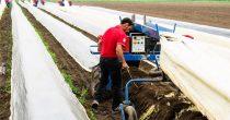 Tri puta više mladih poljoprivrednika u Srbiji
