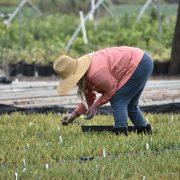 Ko će sve biti obuhvaćen popisom poljoprivrede?