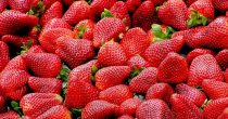 Sezonski radnici neće da beru jagode ni za 3.000 dinara dnevno