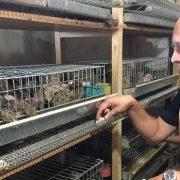 Najveća farma japanskih prepelica prva u Srbiji svoje proizvode prodaje za kriptovalute
