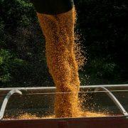 Rastu cene svih osnovnih poljoprivrednih proizvoda