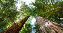 Energetska tranzicija u Srbiji zahteva obnovu šuma