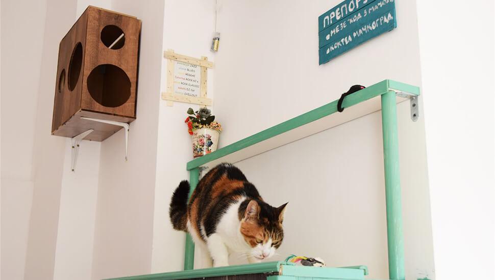 Pansion za mačke