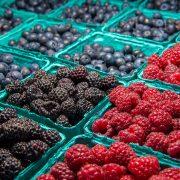 Prevoz jednog kontejnera voća do Amerike izvoznike košta više od 20.000 dolara