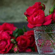 Gajenje ruža profitabilan, ali zahtevan posao