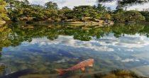 Bespovratna sredstva za nove ribnjake i lovišta