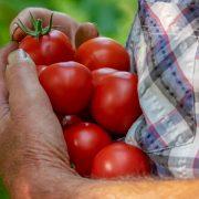Otpis kamate ili dela dugova biće deo rešenja za poljoprivredne penzionere