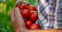 Niska otkupna cena naterala proizvođače paradajza u Leskovcu da izađu na ulicu