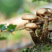 Gljive kao alternativa fosilnim materijalima