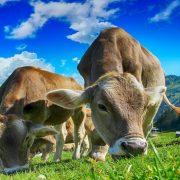 Brazilska poljoprivreda okrenuta ekologiji